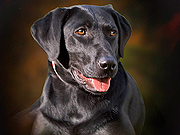 Rehoboth Beach Pet Photography
